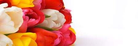 colorful bouquet of fresh spring tulip flowers on white background. isolated. Foto de archivo