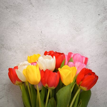 A bouquet of fresh, bright, multi-colored tulips on a light gray background