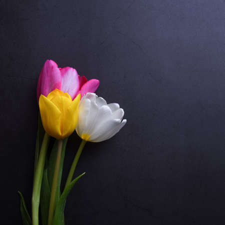 A beautiful bright bouquet of multi-colored tulips in close-up against a dark gray stucco wall Stockfoto