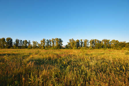 Summer natural landscape, meadow, beautiful blue sky
