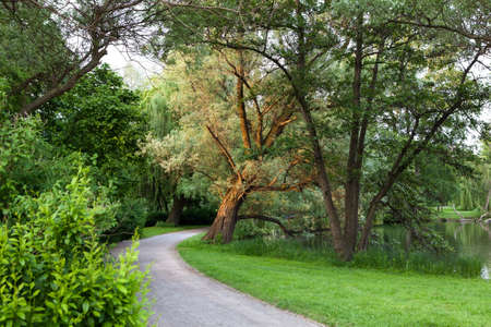 Beautiful road in the park at summer photo