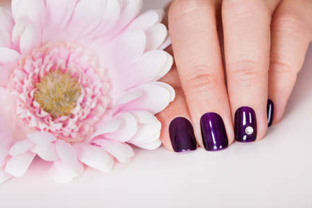 artificial flower: Beautiful manicured nails with purple nail varnish and a tiny crystal displayed alongside a pink dahlia