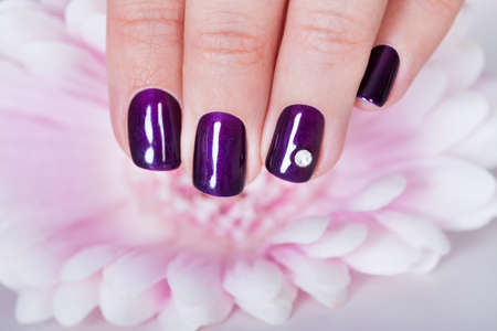 Beautiful manicured nails with purple nail varnish and a tiny crystal displayed alongside a pink dahlia photo