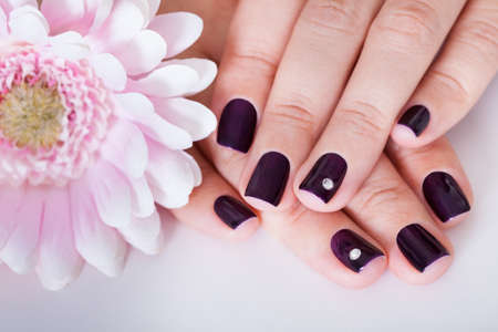 artificial flowers: Beautiful manicured nails with purple nail varnish and a tiny crystal displayed alongside a pink dahlia
