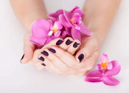 handcare: Woman with beautifully manicured purple nails holding a handful of pink flower petals