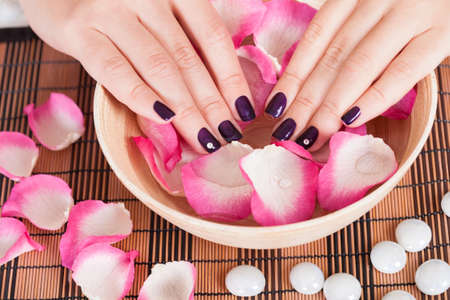 handcare: Female hands with manicured fashion nails with purple varnish in a bowl of rose petals and water in a spa beauty treatment concept