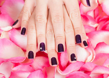 handcare: Woman with beautiful manicured fashion nails holding a handful of pink rose petals Stock Photo