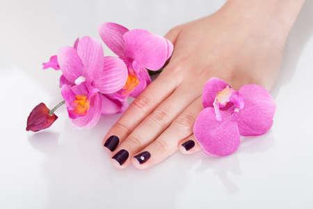 Frische rosa Orchideen rund um die Hand einer Frau mit schönen lila Nägel