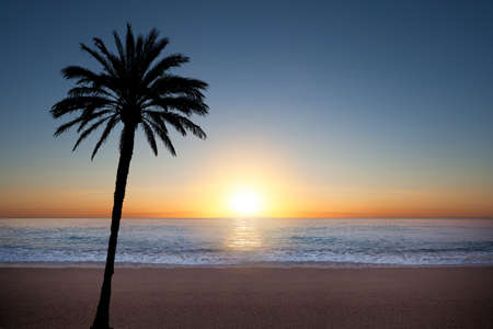 caribbean climate: Palm tree silhouette during sunrise at the sea Stock Photo