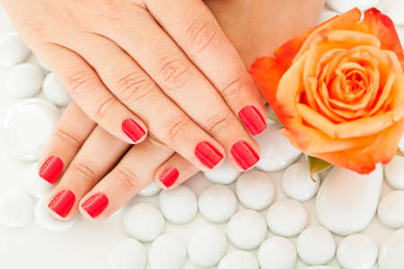 orange rose: Close-up Of Manicured Nail With Nail Varnish Near The Rose Stock Photo