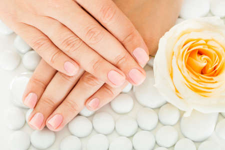 acrylic nails: Close-up Of Manicured Nail With Nail Varnish Near The Rose Stock Photo
