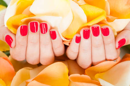 manicured: Close-up Of Manicured Nail With Nail Varnish Holding Petals