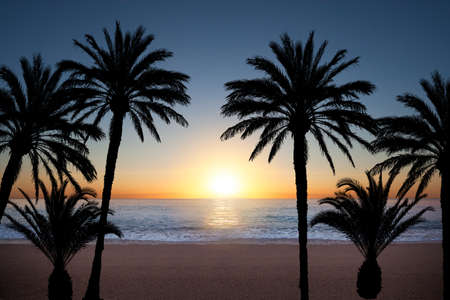 breeze: Palm tree silhouettes during sunrise at the sea