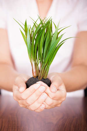 growing business: Close-up Of Hand With A Plant Growing From Pile Of Coins