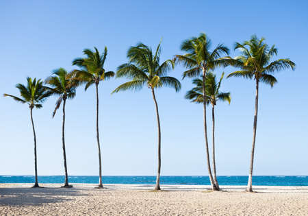 palmtree: Tall palm trees in a row at tranquil beach Stock Photo