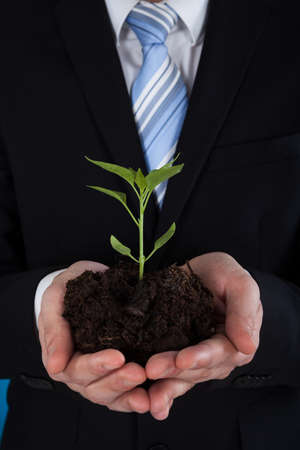 Midsection of young businessman holding sapling in his hands photo