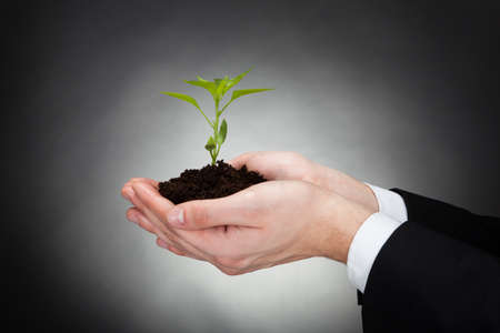 representing: Cropped image of businessman holding sapling representing development against black background