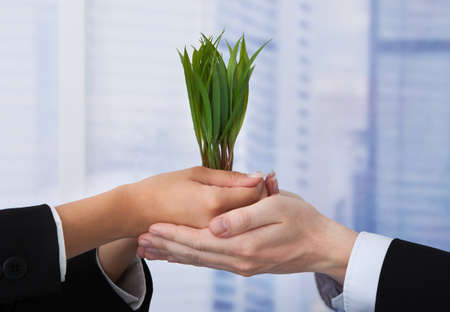 growing partnership: Cropped image of business people holding saplings in office Stock Photo
