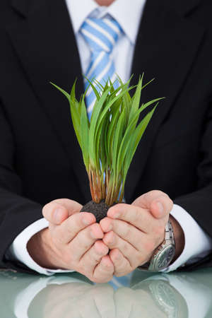 environmental conversation: Midsection of young businessman holding saplings at office desk