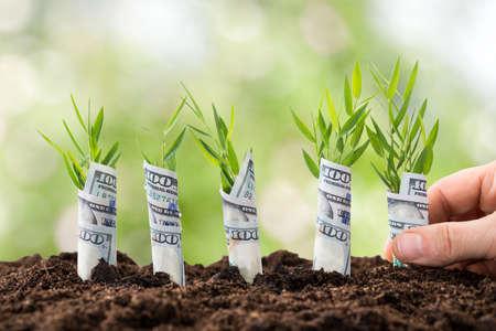 Close-up Van Iemands hand planten boompjes Bedekt met Amerikaanse dollars Stockfoto