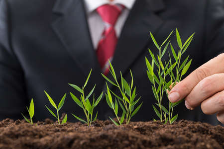 green plants: Close-up Photo Of A Businessman Planting Sapling