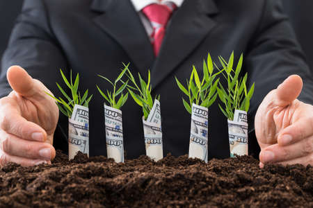 growing business: Close-up Of Businessman Protecting Sapling Covered With American Dollars