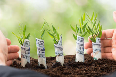 Close-up Of Businessmans Hand Protecting Sapling Covered With American Dollars