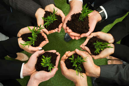 responsibility: Group Of Businesspeople Hands Holding Green Plant With Soil