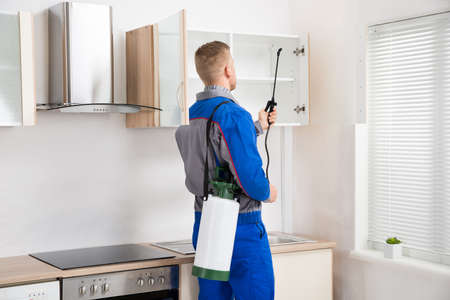 Young Worker Spraying Insecticide On Shelf Of Kitchen Room Stock Photo