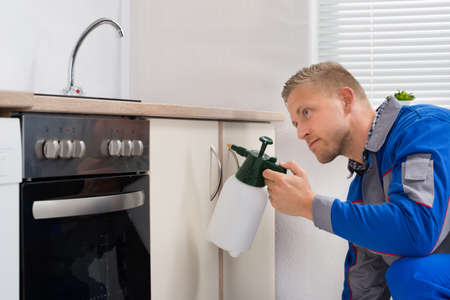 sprayer: Young Worker Spraying Pesticide On Cabinet With Sprayer Stock Photo