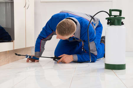 exterminating: Male Worker Kneeling On Floor And Spraying Pesticide On Wooden Cabinet Stock Photo