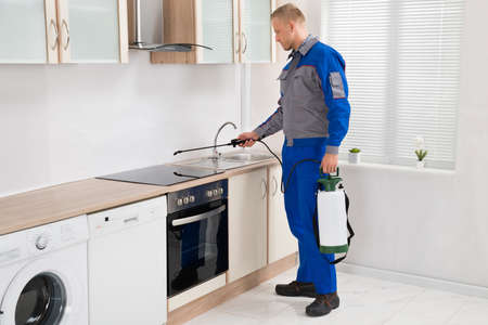 pests: Young Male Pest Control Worker Spraying Pesticide On Induction Hob In Kitchen Stock Photo
