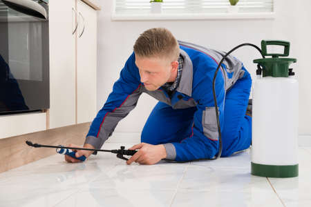 Male Worker Kneeling On Floor And Spraying Pesticide On Wooden Cabinet Stock Photo