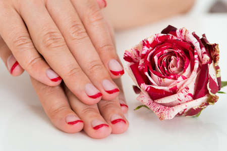 nailart: Close-up Of Beautiful Female Hands With Red Nail Varnish Near The Rose