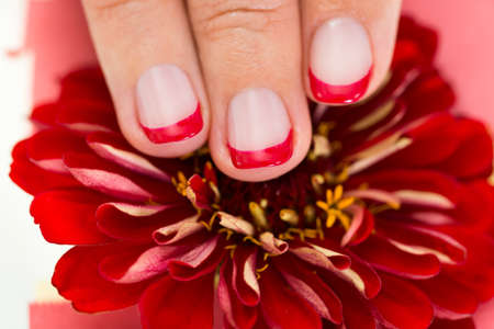 nailart: Close-up Of Female Hands With Manicure Nail Holding Red Gerbera Stock Photo