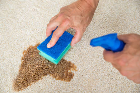 stain: Cropped image of male janitor cleaning stain on carpet with sponge Stock Photo