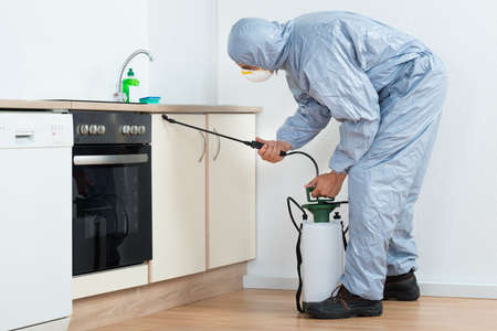 exterminator: Full length of exterminator spraying pesticide on wooden cabinet in kitchen
