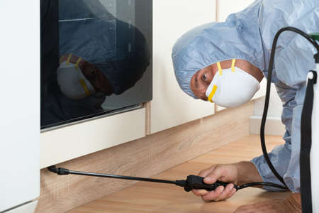 exterminator: Mature exterminator spraying pesticide on wooden cabinet of kitchen