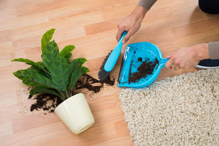 mud house: Cropped hands of man cleaning mud spilled from potted plant on floor at home