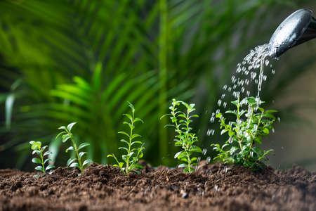regar las plantas: Primer del agua que se vierte sobre las plantas de poder de riego Foto de archivo