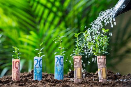 dinero euros: Primer del agua que se vierte sobre las plantas envueltos con las cuentas euro en tierra