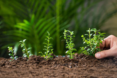 green plant: Closeup of mans hand planting tree on ground Stock Photo