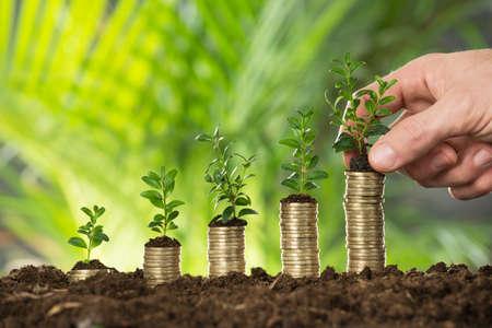 Gros plan, personne, main, tenue, petit, plante, pile, pièces Banque d'images