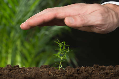 land plant: Close-up Of A Person Hand Protecting Plant On Land