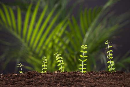 Photo Of Fresh Green Plant Growing From Soil Reklamní fotografie