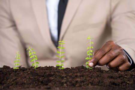 land plant: Persons Hand Planting Small Green Plant On Land Stock Photo