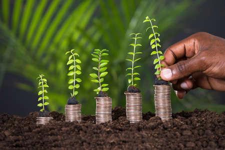 salarios: Pequeña Planta mano que sostiene el de alguien a monedas apiladas