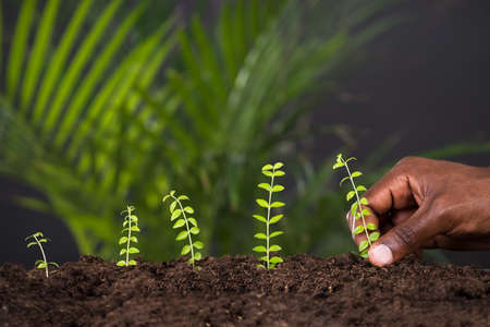 Close-up Of Persons Hand Planting Plant In Soil
