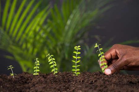 Close-up van de persoon die de hand planten Plant in de bodem