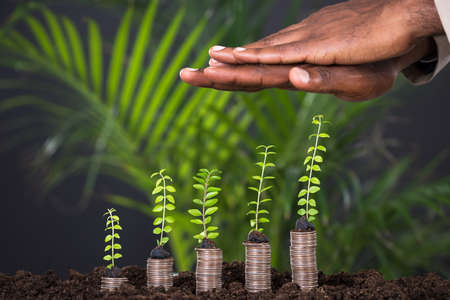 money and saving: Persons Hand Protecting Small Plant On Stacked Coins